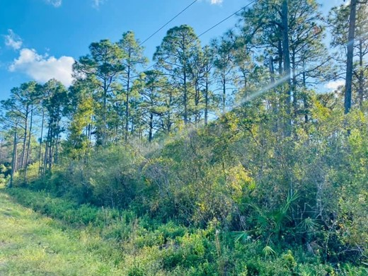 Listing #308625 located in Apalachicola, FL