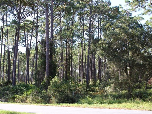 Listing #309295 located in Carrabelle, FL